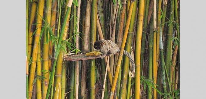 Pesqueiro Lagoa dos Patos - Fotos do Local