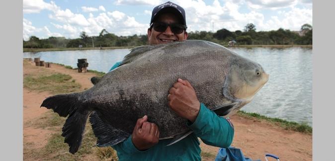 Pesqueiro do Italiano - Peixes do Local