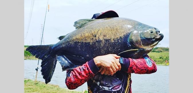 Garça Branca Pesca e Lazer - Peixes do Local