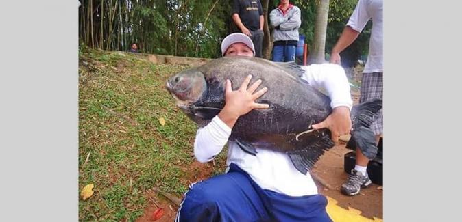 Pesqueiro Lagoa dos Patos - Peixes do Local