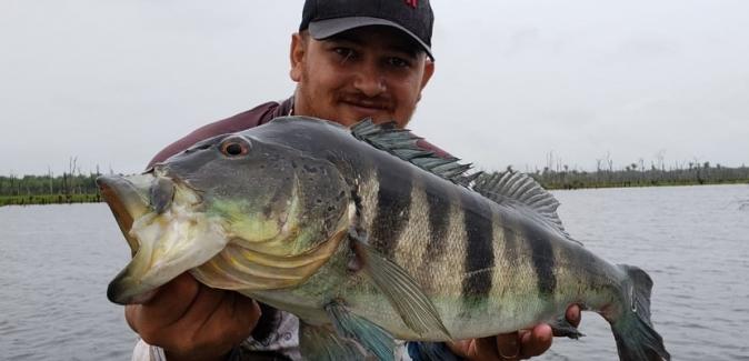 Operação Marreco Pescador - Peixes do Local