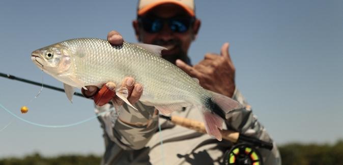 Ituzaingó Fishing - Peixes do Local