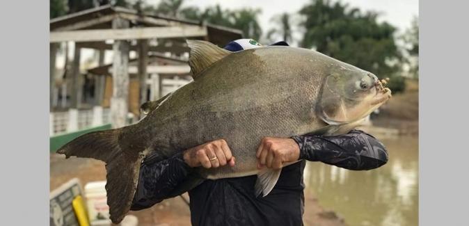 Pesqueiro Recanto dos Peixes (Piracicaba) - Peixes do Local
