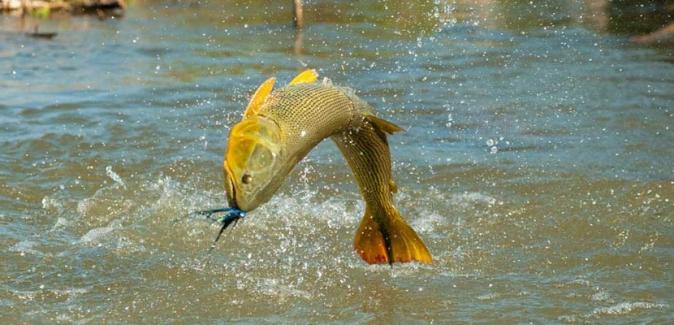 Posada Hambaré - Peixes do Local