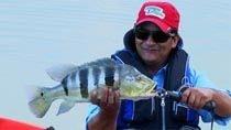Pesque e Pague - Os bocudos tucunarés na mira de Denis Garbo