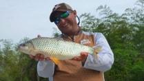 Pasión por la Pesca - As piaparas do rio Paraná