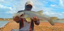 RBT Fishing - Robalos em fazenda de camarão
