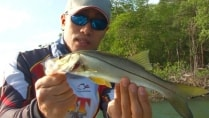 RBT Fishing - Plugs voltados para robalo