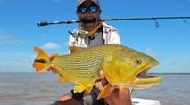 Momento da Pesca - A desafiante pesca de dourado na Argentina