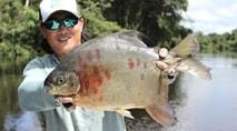 Biopesca - Os grandes pacus borracha do rio Teles Pires