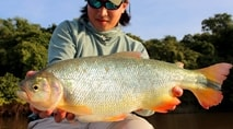 Biopesca - Pescaria de Piracanjuba com milho na Argentina
