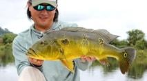 Biopesca - Tucunaré-amarelo na cheia do rio Teles Pires