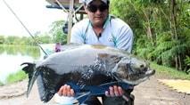 Pesque e Pague - Gigantes tambas no Sol Pescaria dão trabalho