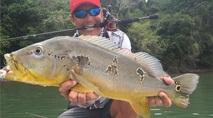 Momento da Pesca - Os fortes tucunarés das correntezas do Tapajós