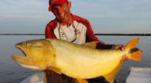 Pasión por la Pesca - Os grandes dourados nas águas do rio Paraná