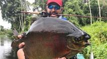 Momento da Pesca - Peixes diversos no rio Teles Pires, Mato Grosso