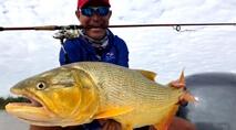 Momento da Pesca - Dourados e traíras no rio Paraná