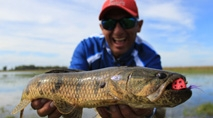 Pasión por la Pesca - Pesca de traíras com fly em Corrientes