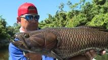 Momento da Pesca - Os gigantes trairões do rio Arapari
