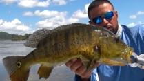 Pura Pesca - O piscoso rio Xingu