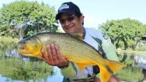 Pesque e Pague - Peixes briguentos do Pesqueiro Três Lagoas