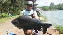 Pesque e Pague - Os gigantes peixes do Sol Pescarias