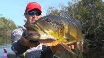 Momento da Pesca - Tucunarés do rio Itapará