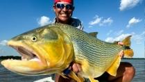 Momento da Pesca - Grandes dourados do rio Paraná