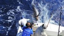 Momento da Pesca - Pesca de marlins-azuis em equipe