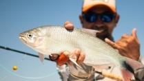 Na Pegada do Fly - Na pegada dos onívoros em águas argentinas